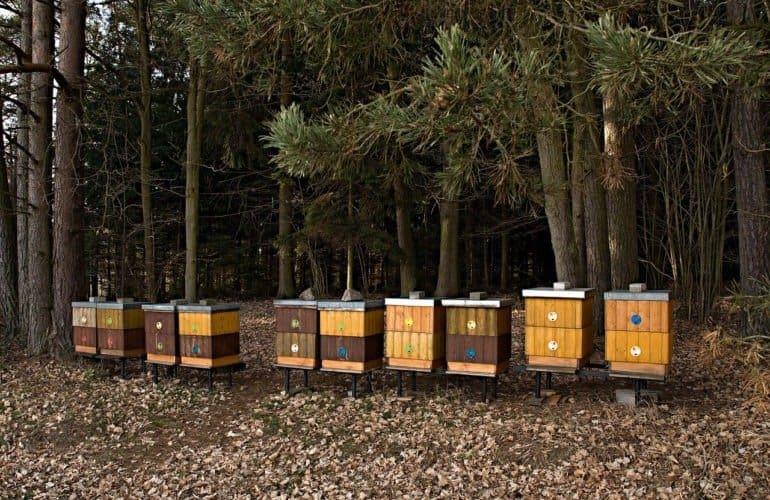 kandang lebah modern dari papan kayu