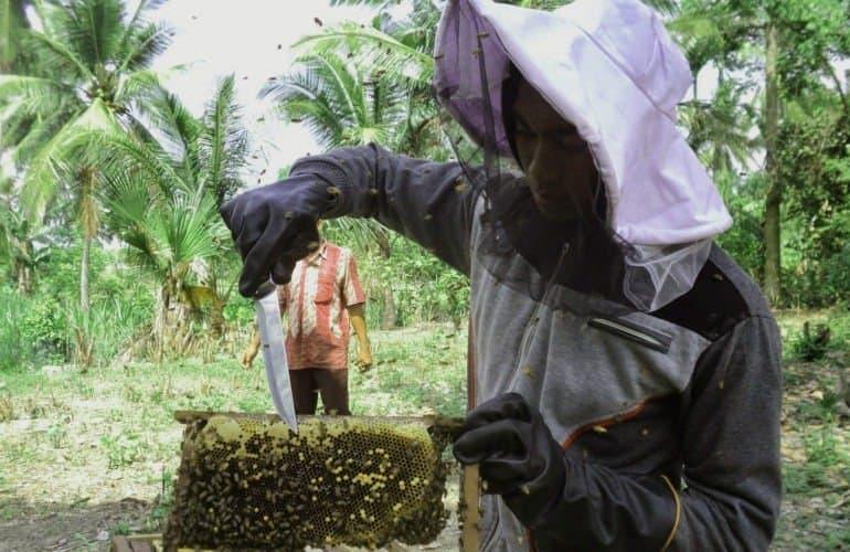 pakaian ternak lebah madu