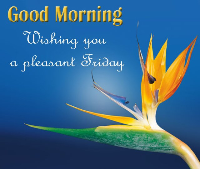 Good Morning Friday Wishes Images Good Morning Images Quotes Wishes Messages Greetings Ecards