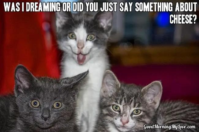 Cute Good Morning Meme_Cat