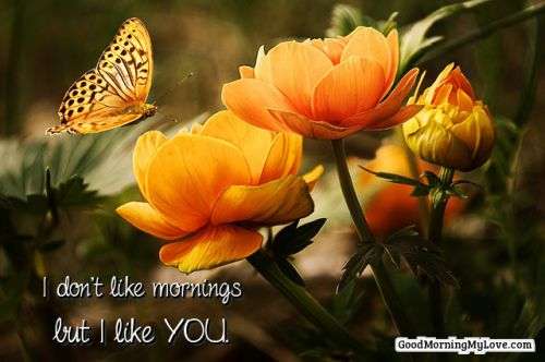 good morning quotes flower