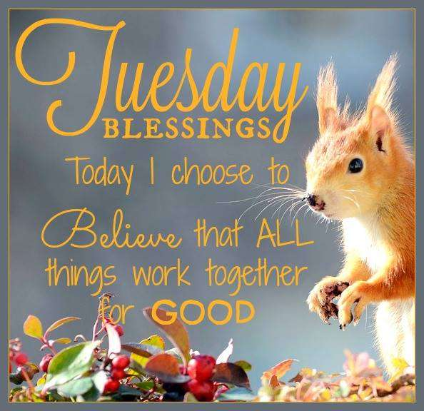 Good Morning Tuesday Pics Goodmorningpics Com