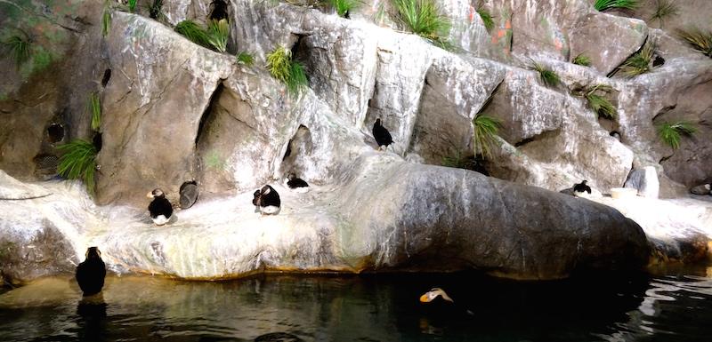 blog usa, zoo st louis missouri, découverte états unis,forest park, saint louis zoo, zoo missouri, visiter zoo saint louis, promenade forest park, quoi faire a forest park