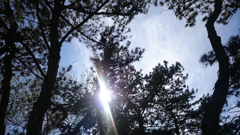 forest park, st louis missouri, blog usa, trip usa, blog voyage, voyage mid west