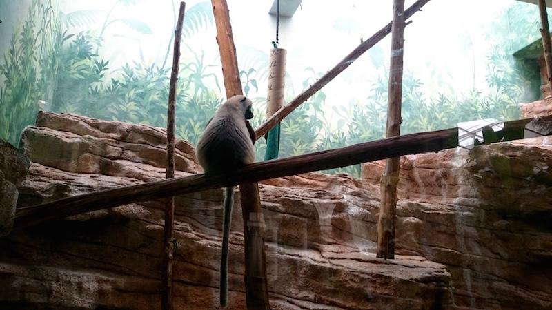 blog voyage usa, blog voyage, blog voyage etats unis, saint louis missouri , zoo st louis, fores park st louis, zoo usa