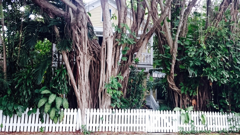 croisière bahamas, croisière caraïbe, visiter key west, blog key west, avis key west, photo key west