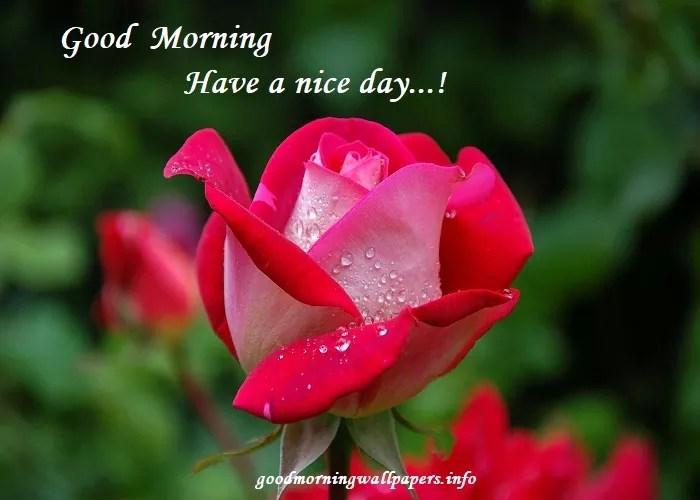Good Morning Flower Images Red Yellow Orange Pink Blue