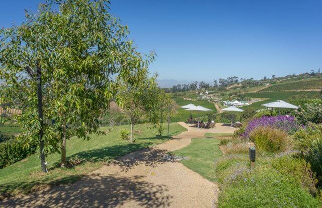 Kaapstad vakantie Zuid-Afrika wijngebied