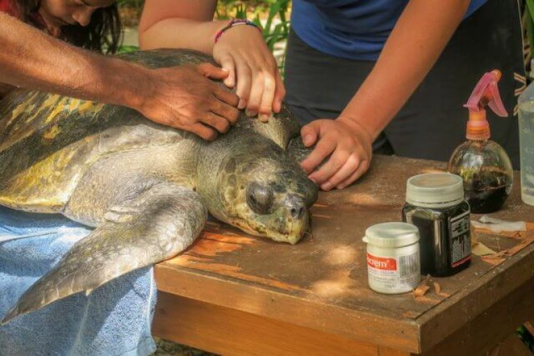 Malediven reizen Coco Palm Dhuni-schildpad