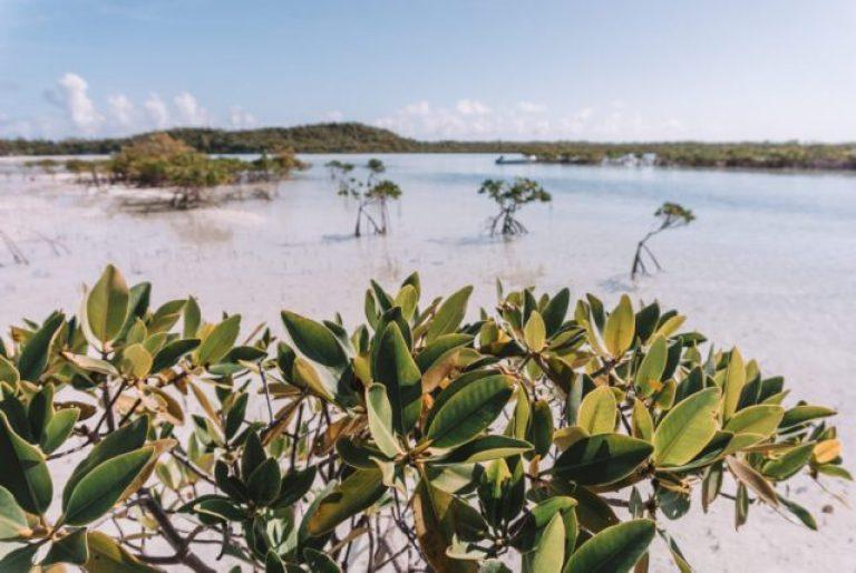 Bahama's Exumas Yacht Charter Shroud Cay Mangroves