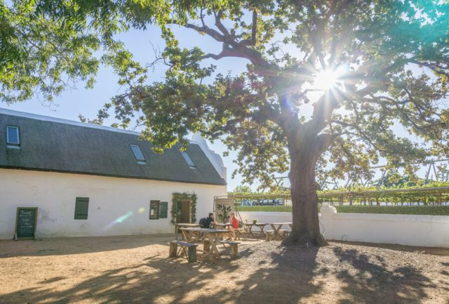 Cape Town Vacation Stellenbosch Winery