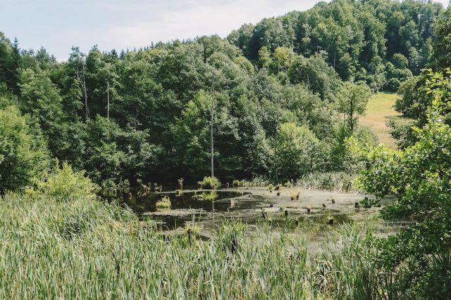 Roemenië vakantie natuur