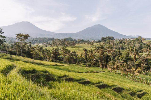 Bali attracties Jatiluwih rijstterrassen panorama