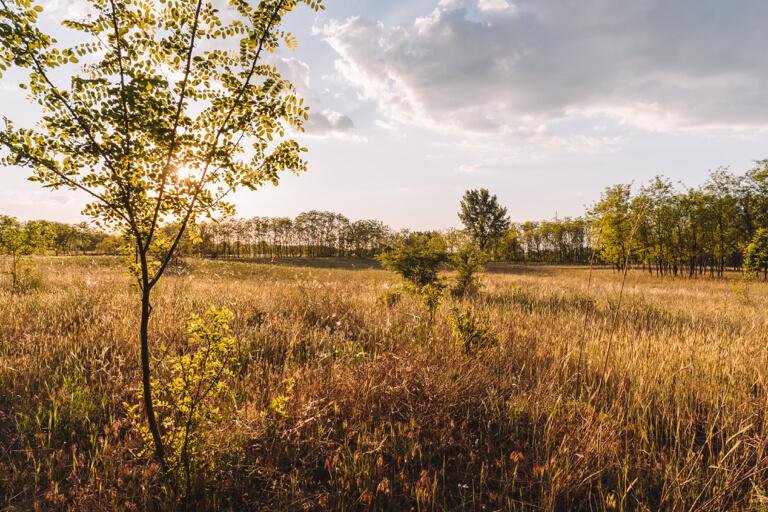 Hongarije veld