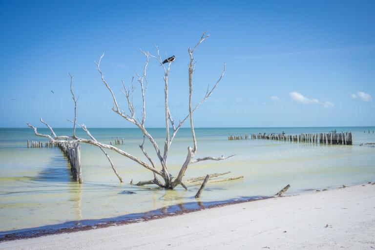 Isla Holbox Mexico Balanco da casa Punta Coco
