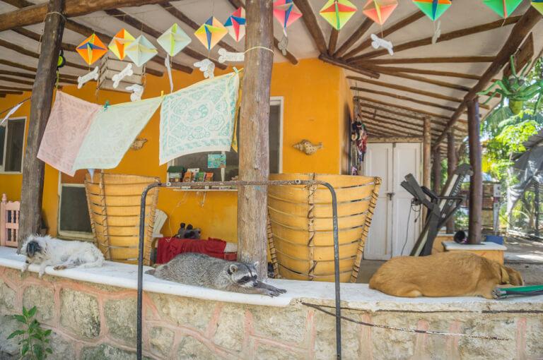Refugio Holbox Animal Sanctuary
