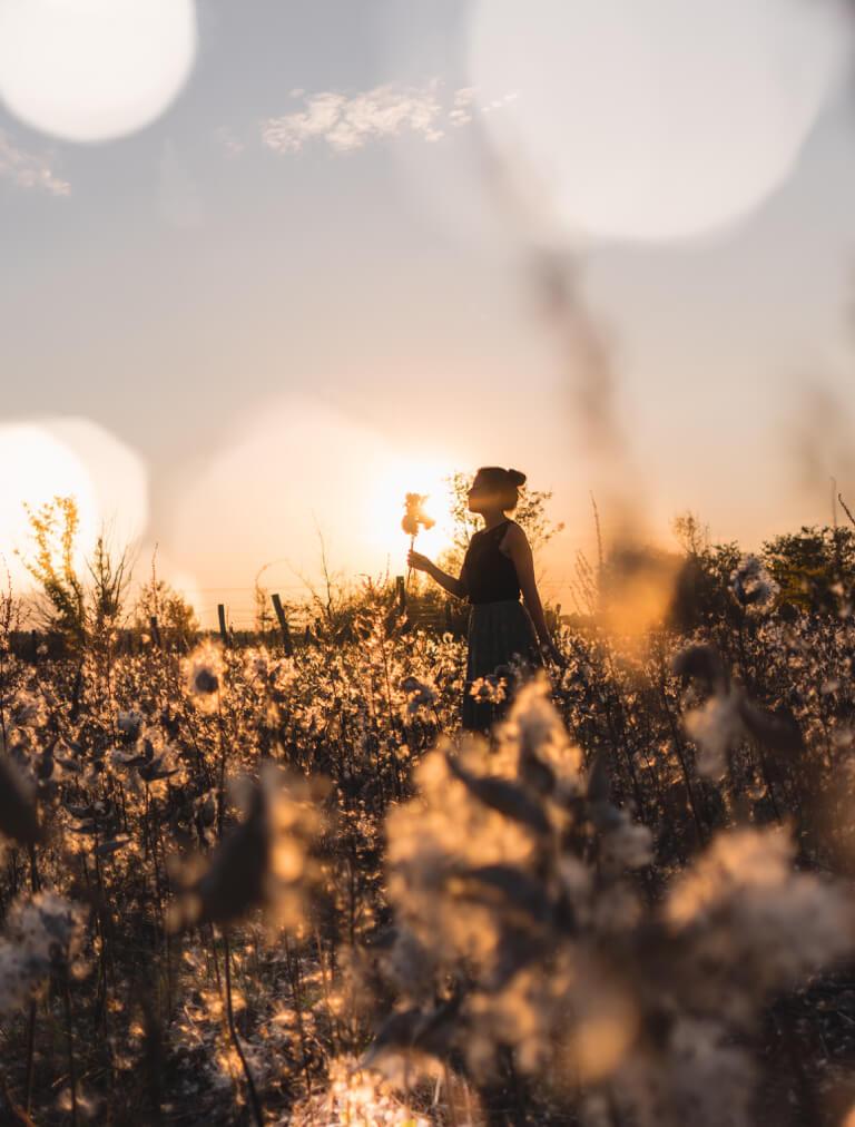 Hongarije Puszta milkweed veld