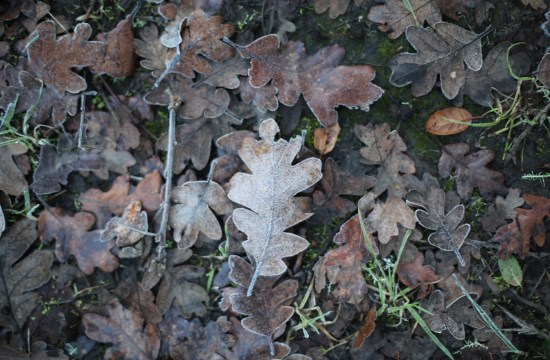 leaf - early morning