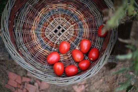 garden tomatoes & marigold - 1 (1)