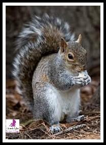 Beautiful Animal Images