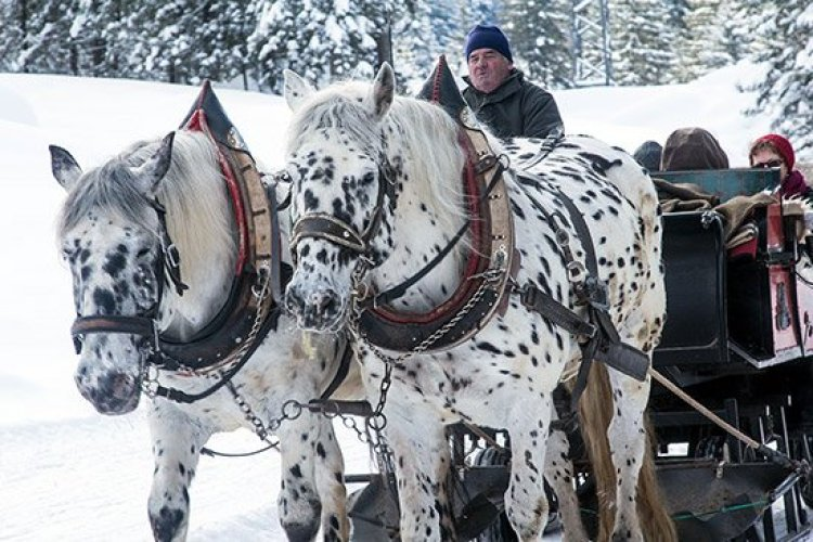 Christmas traditions, people going on a sleigh ride