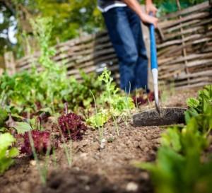 tending-soil
