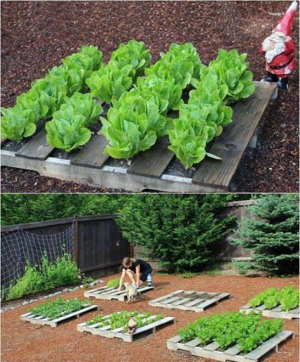 Raised Garden Pallets