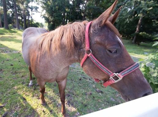 horseroad-4