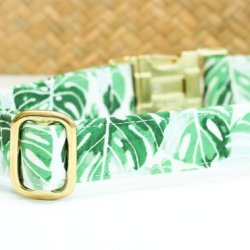 Banana Leaf Dog Collar