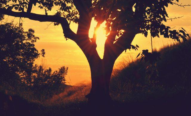 Rzeczoznawca majątkowy  a drzewo na działce