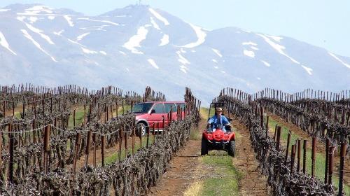 golan-heights-vineyard