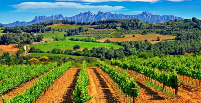 penedes-wine-region-spain
