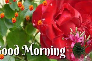 Good Morning Whatsapp Status Video Download Good Whatsapp Status