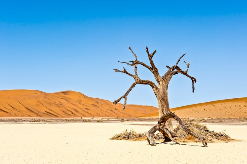 Lone Tree, Hiddenvlei, Namibia Landscape Photography