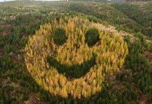 درختوں نے مل کر مسکراتا ہوا چہرہ بنادیا