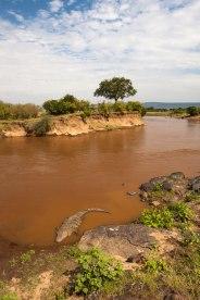 Mara River Maasai Mara - Isak Pretorius Wildlife Photography