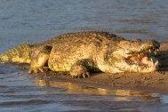 Selous Game Reserve - Michael Poliza Photographer