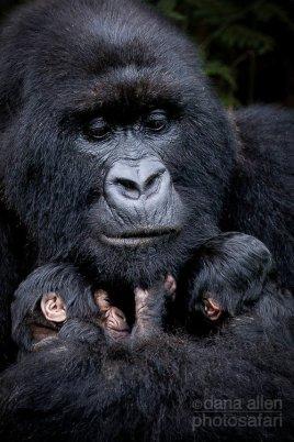 Family by Dana Allen