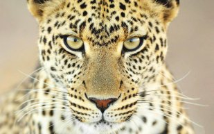 The eyes have it - Kelly Okavango