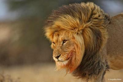 The King by Angelika Ritter.