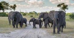 Elephants photographed in Hwange National Park, Zimbabwe