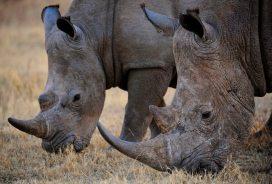Grazing - (Chris Martin Wildlife Photography)