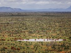 red-elephants-stirton_Tsavo