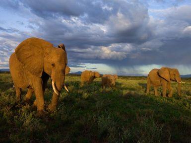 samburu-elephants-group-kenya_28396_990x742