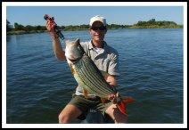 Tiger fish on the Zambesi