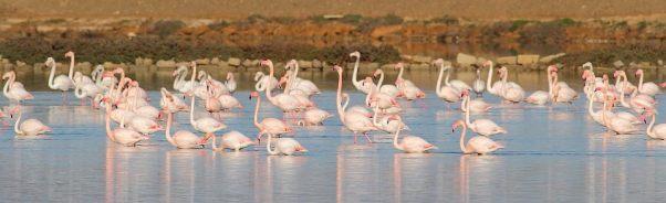 Flamingo - Guido Muratore