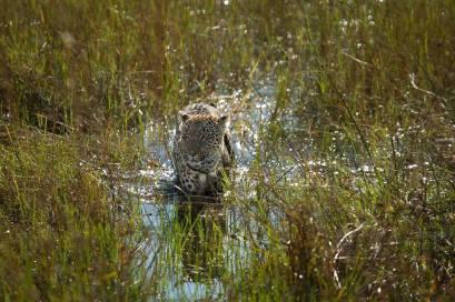 Vumbura Plains in the Okavango Delta by Deon de Villiers