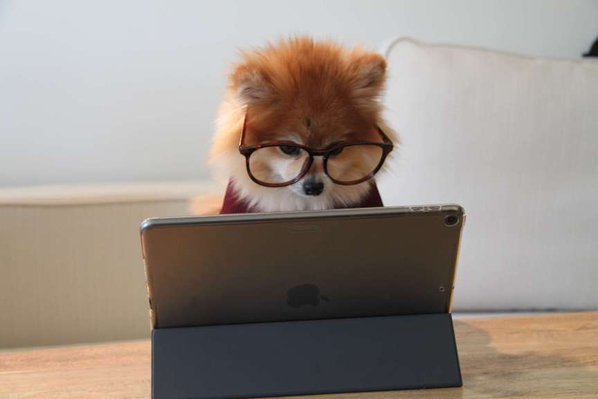 puppy wearing glasses using a tablet computer