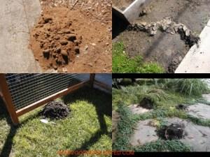 trapping moles