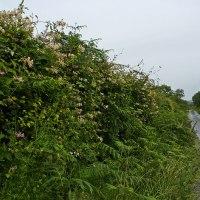 Everybody Needs A Hedgerow